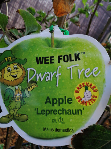Apple-Dwarf Leprechaun ( Dwarf Granny smith)4L