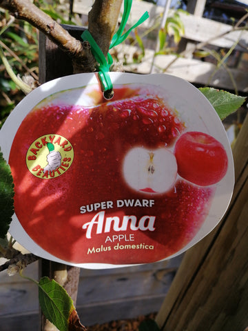 Apple-Super Dwarf Anna Apple