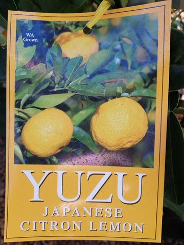 lemon- Yuzu japanese citrus