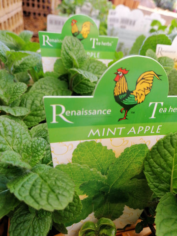 Mint - Apple