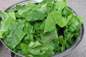 Spinach - Galilee Seed packet
