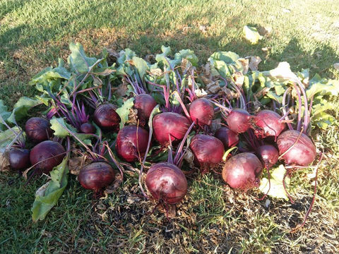 Beetroot – Detroit Dark Red Seed Packet