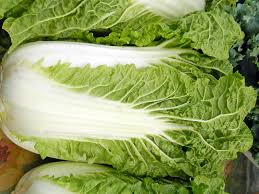Punnet - Chinese Cabbage 'Matilda'