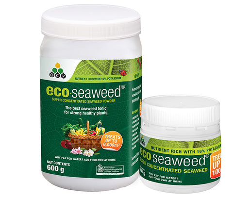 Eco-seaweed concentrated