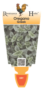 Oregano -  Greek 650 ml pot