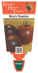 Tomato - Black Russian Pot