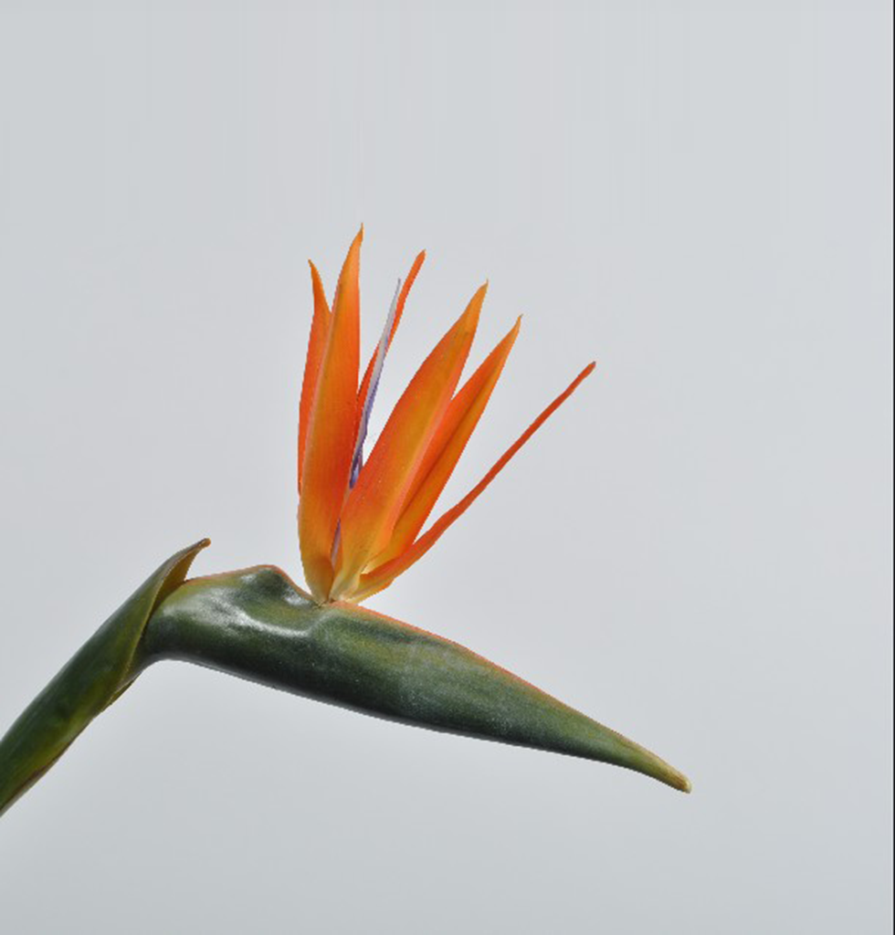 FAUX BIRD OF PARADISE LONG FLOWER STEM