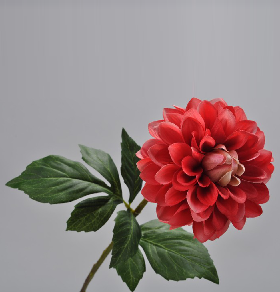 DAHLIA BRIGHT RED FLAME