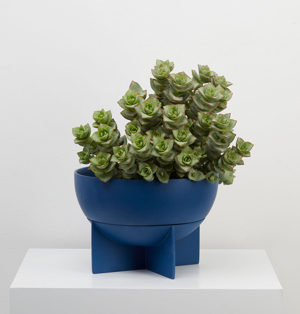 Round and dome shaped indoor planter available in a rich Terracotta brown or deep Neptune blue coloured resin.