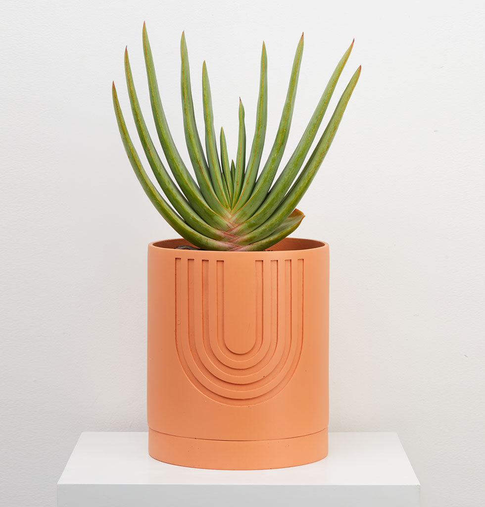 The large indoor Etch Planter is as beautiful as it is practical. Vintage-inspired patterns that have been hand etched into moulds. Hand-crafted from strong tough resin and made in small batch quantities to minimise waste. Each pot is cleverly designed with a tray, so your plant has proper drainage. By Capra Designs