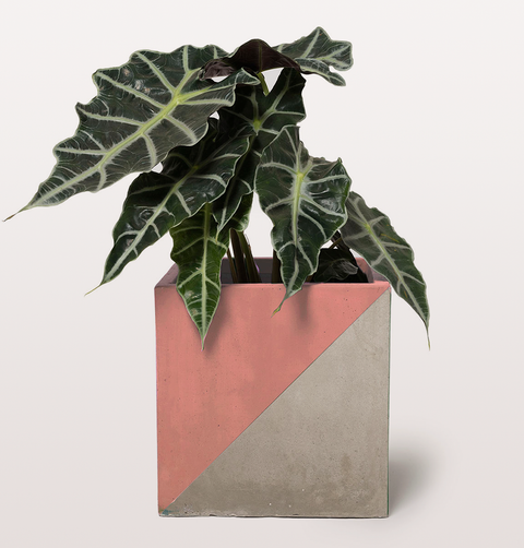 CORAL PINK TRIANGLE PLAY POT by DARKROOM