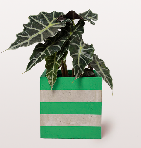 Darkroom, hand painted concrete planter suitable for outdoors. Bold green stripes and cool grey. Suitable for indoor and outdoor including drainage hole.