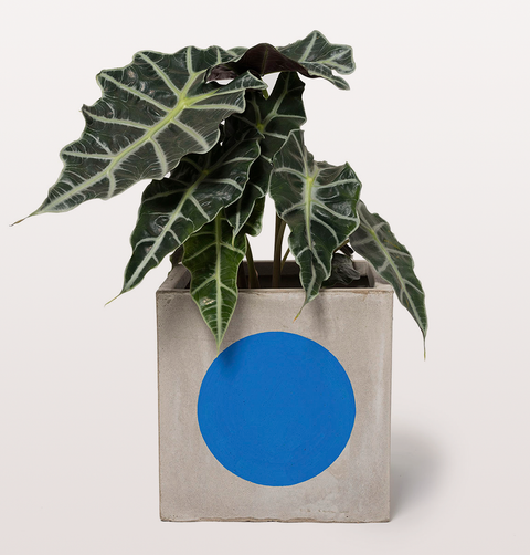 BLUE SPOT PLANT PLAY POT