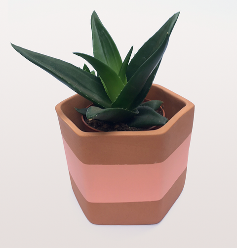 PINK CORAL HEXAGON PLANT POT by DARKROOM