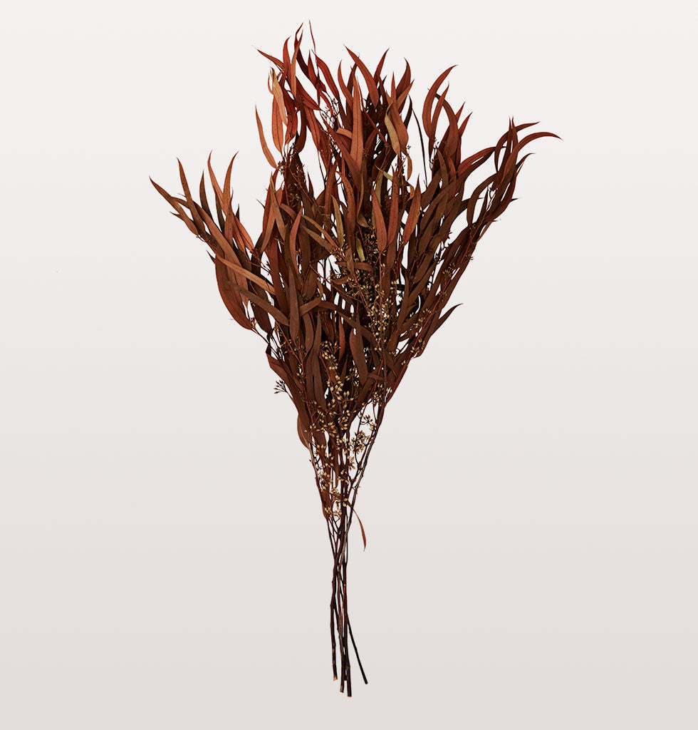 Dried brown eucalyptus that is perfect for autumn. This bunch of rusty brown eucalyptus leaves is perfect for a mixed arrangement with other flowers, branches or greenery. Madam Stoltz forever dried flowers.