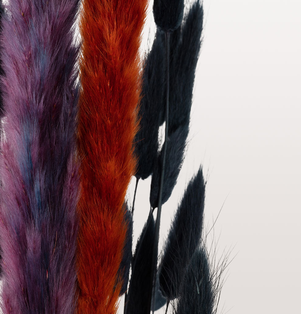 Close up of dried foxtails and black bunny tail dried flowers
