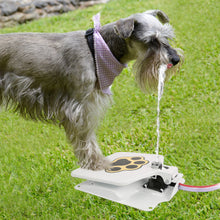 Drinking Doggie Water Fountain