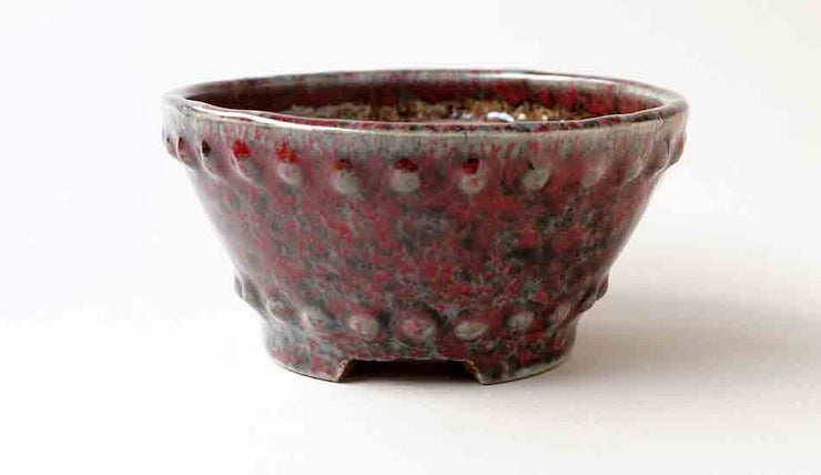 Round Bonsai Pot in Red Glaze with Black Dots by Shuuhou+++Shipping Free!