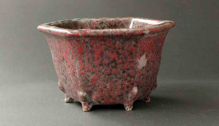 Shuuhou Hexagonal Bonsai Pot with Red and Black Dots+++Shipping Free!