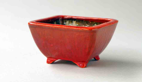 Juko Orange Square Bonsai Pot