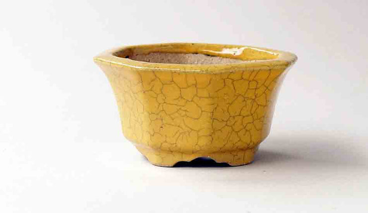 Octagonal Bonsai Pot in Yellow Glaze by Juko+++Shipping Free!