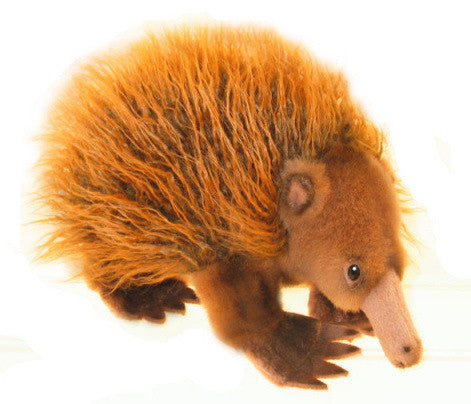 Native Australian Echidna Soft Plush Toy (24cm)