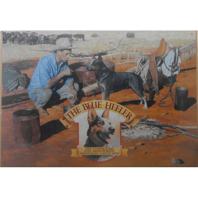 Australian Cattle Dog Blue Heeler Tin Sign (35cm x 50cm)