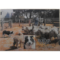 Border Collie Dog Tin Sign (35cm x 50cm)