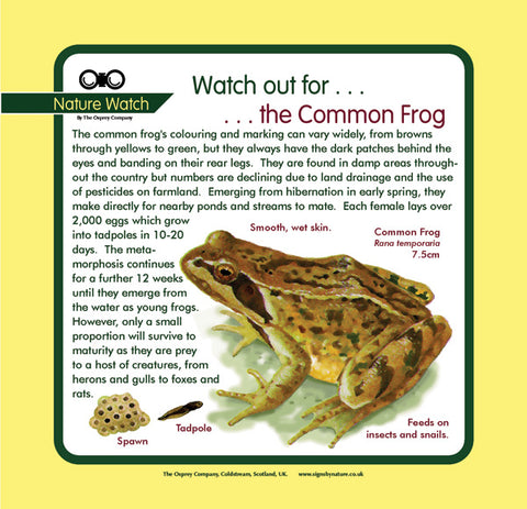 'Common frog' Nature Watch Panel