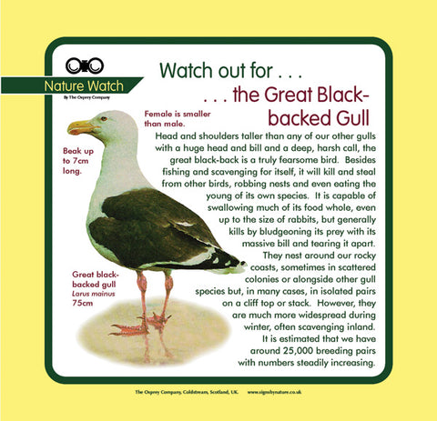 'Great black-backed gull' Nature Watch Panel