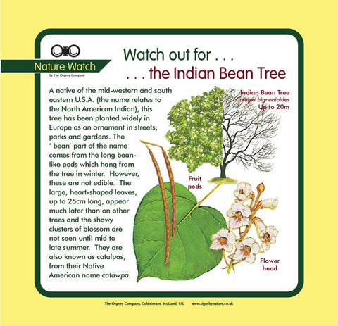 'Indian bean tree' Nature Watch Panel