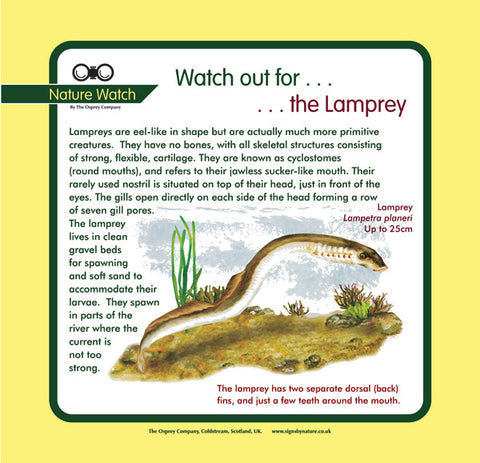 'Lamprey' Nature Watch Panel