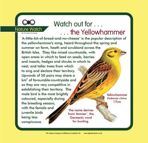 'Yellowhammer' Nature Watch Panel