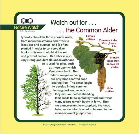 'Alder' Nature Watch Panel