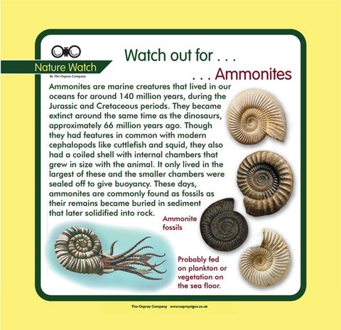'Ammonites' Nature Watch Panel