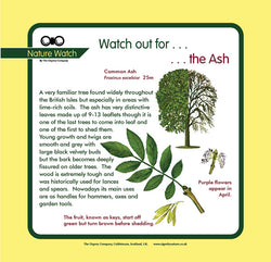 'Ash' Nature Watch Panel