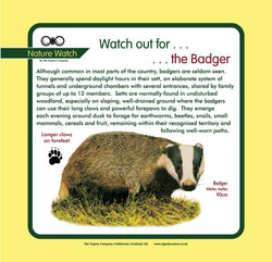 'Badger' Nature Watch Panel