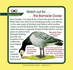 'Barnacle goose' Nature Watch Panel