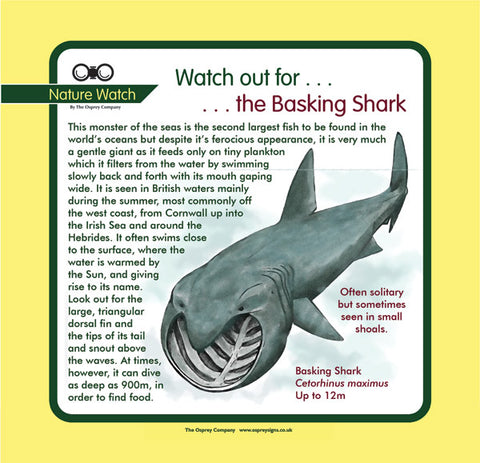 'Basking shark' Nature Watch Panel