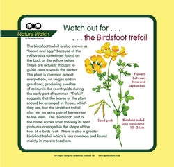'Birdsfoot trefoil' Nature Watch Panel