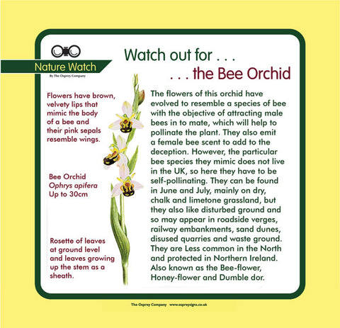 'Bee Orchid' Nature Watch Panel
