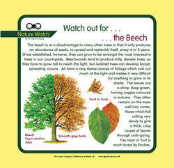'Beech' Nature Watch Panel