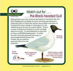 'Black headed gull' Nature Watch Panel