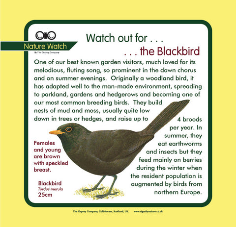 'Blackbird' Nature Watch Panel