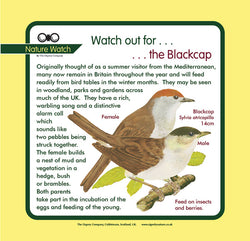 'Black cap'' Nature Watch Panel