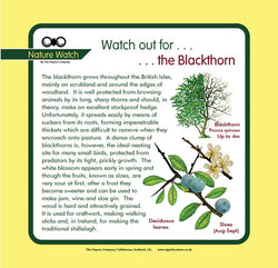 'Blackthorn' Nature Watch Panel