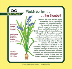 'Bluebell' Nature Watch Panel