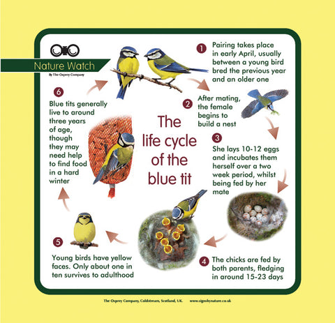 'Blue tit life cycle' Nature Watch Panel