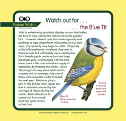 'Blue tit' Nature Watch Panel