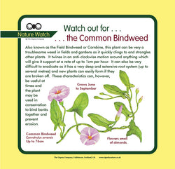 'Bindweed' Nature Watch Panel